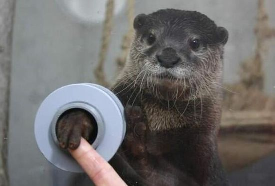 When otters get Ebola.